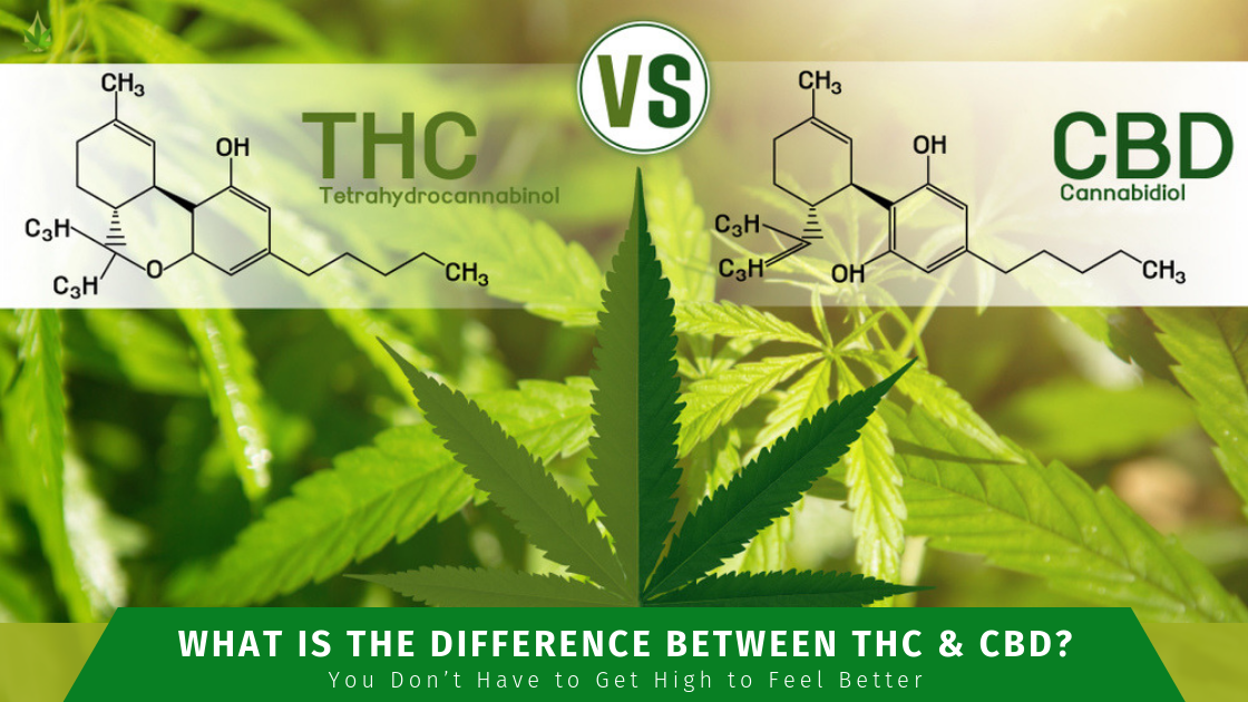 difference between THC and CBD header